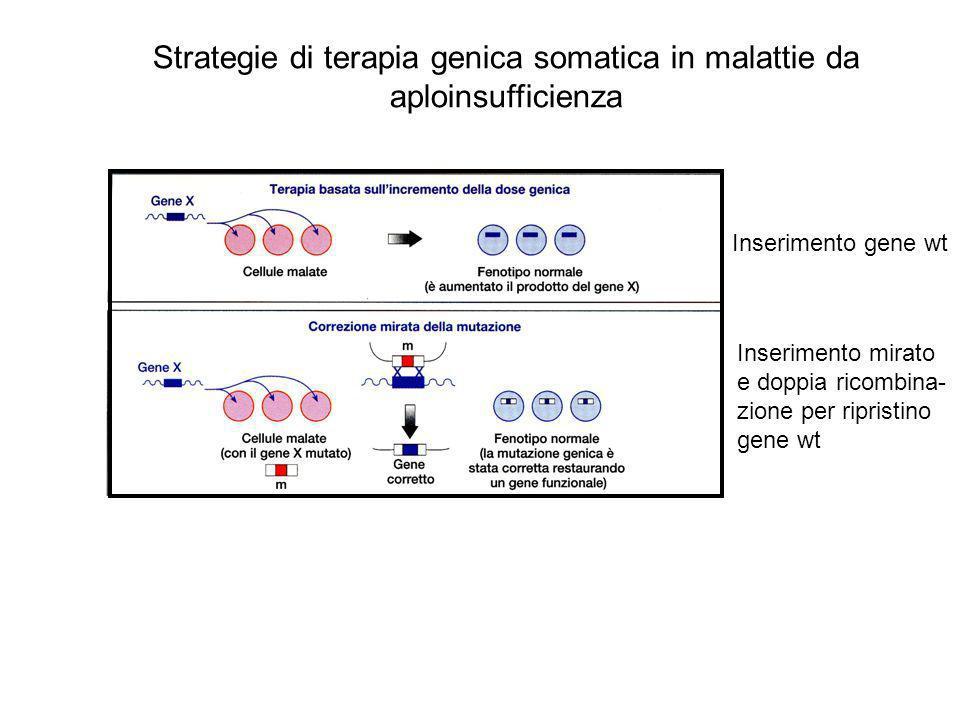 Inserimento gene wt Inserimento mirato e doppia ricombina- zione per ripristino gene wt Strategie di terapia genica somatica in malattie da aploinsufficienza