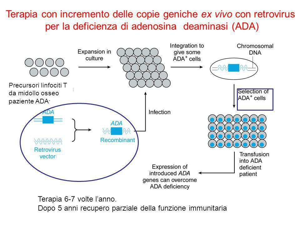 Terapia con incremento delle copie geniche ex vivo con retrovirus per la deficienza di adenosina deaminasi (ADA) Terapia 6-7 volte lanno.