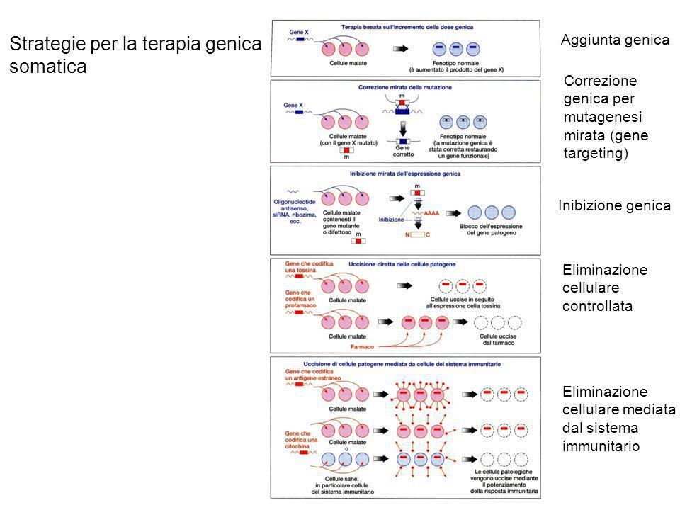 Terapia genica somatica in vivo ed ex vivo in vivo ex vivo