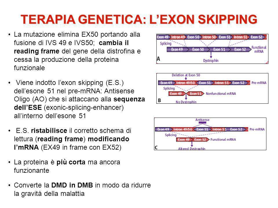 TERAPIA GENETICA: LEXON SKIPPING La mutazione elimina EX50 portando alla fusione di IVS 49 e IVS50; cambia il reading frame del gene della distrofina e cessa la produzione della proteina funzionale Viene indotto lexon skipping (E.S.) dellesone 51 nel pre-mRNA: Antisense Oligo (AO) che si attaccano alla sequenza dellESE (exonic-splicing-enhancer) allinterno dellesone 51 E.S.