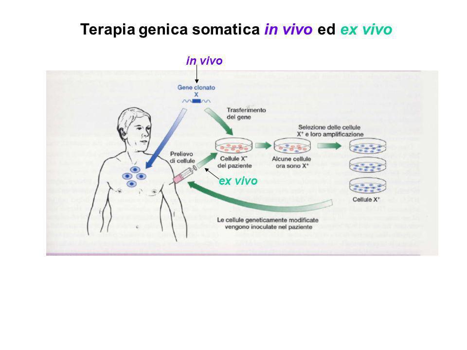 Terapia genica somatica ex vivo - Applicabile solo a certi tipi cellulari: cellule in divisione e coltivabili in vitro (es: da midollo osseo, pelle, tumori)