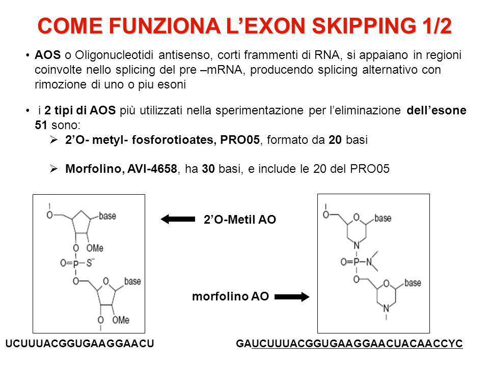 COME FUNZIONA LEXON SKIPPING 1/2 AOS o Oligonucleotidi antisenso, corti frammenti di RNA, si appaiano in regioni coinvolte nello splicing del pre –mRNA, producendo splicing alternativo con rimozione di uno o piu esoni i 2 tipi di AOS più utilizzati nella sperimentazione per leliminazione dellesone 51 sono: 2O- metyl- fosforotioates, PRO05, formato da 20 basi Morfolino, AVI-4658, ha 30 basi, e include le 20 del PRO05 2O-Metil AO morfolino AO UCUUUACGGUGAAGGAACUGAUCUUUACGGUGAAGGAACUACAACCYC