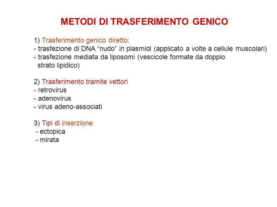 METODI DI TRASFERIMENTO GENICO 1) Trasferimento genico diretto: - trasfezione di DNA nudo in plasmidi (applicato a volte a cellule muscolari) - trasfezione mediata da liposomi (vescicole formate da doppio strato lipidico) 2) Trasferimento tramite vettori - retrovirus - adenovirus - virus adeno-associati 3) Tipi di inserzione: - ectopica - mirata