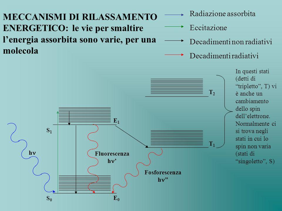 Radiazione assorbita Eccitazione Decadimenti non radiativi Decadimenti radiativi MECCANISMI DI RILASSAMENTO ENERGETICO: le vie per smaltire lenergia a