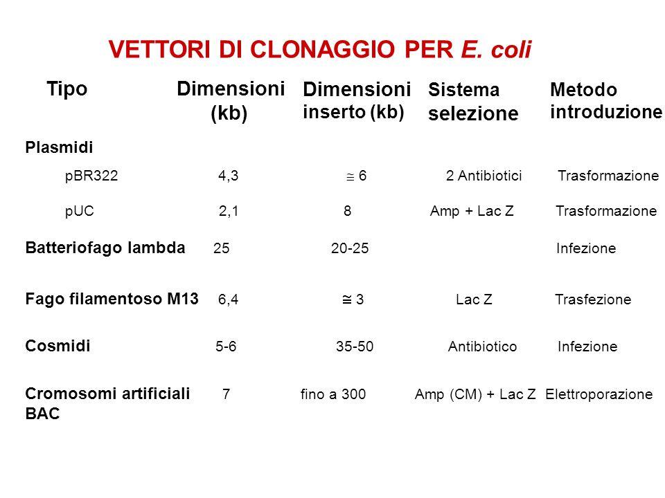 Batteriofago lambda 25 20-25 Infezione VETTORI DI CLONAGGIO PER E. coli TipoDimensioni (kb) Dimensioni inserto (kb) Sistema selezione Metodo introduzi