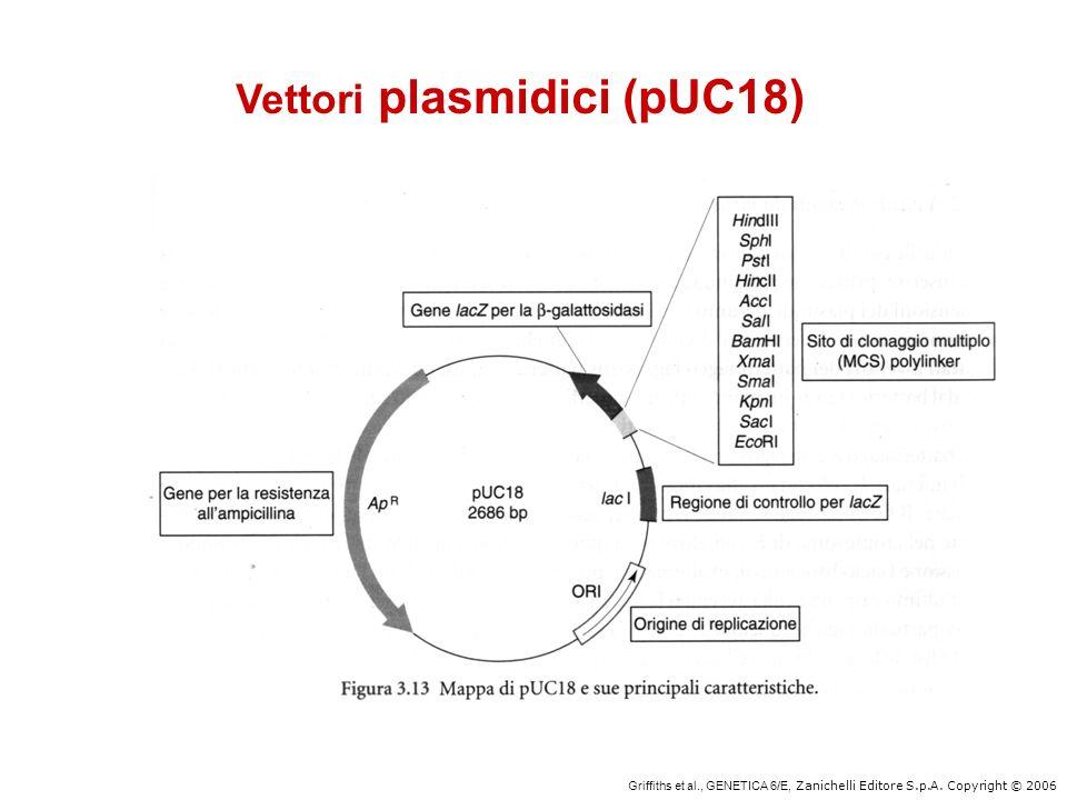 Vettori plasmidici (pUC18)