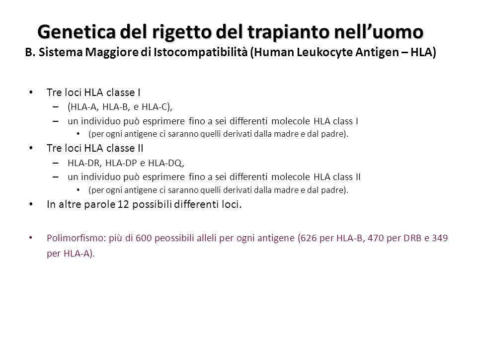 Tre loci HLA classe I – (HLA-A, HLA-B, e HLA-C), – un individuo può esprimere fino a sei differenti molecole HLA class I (per ogni antigene ci saranno