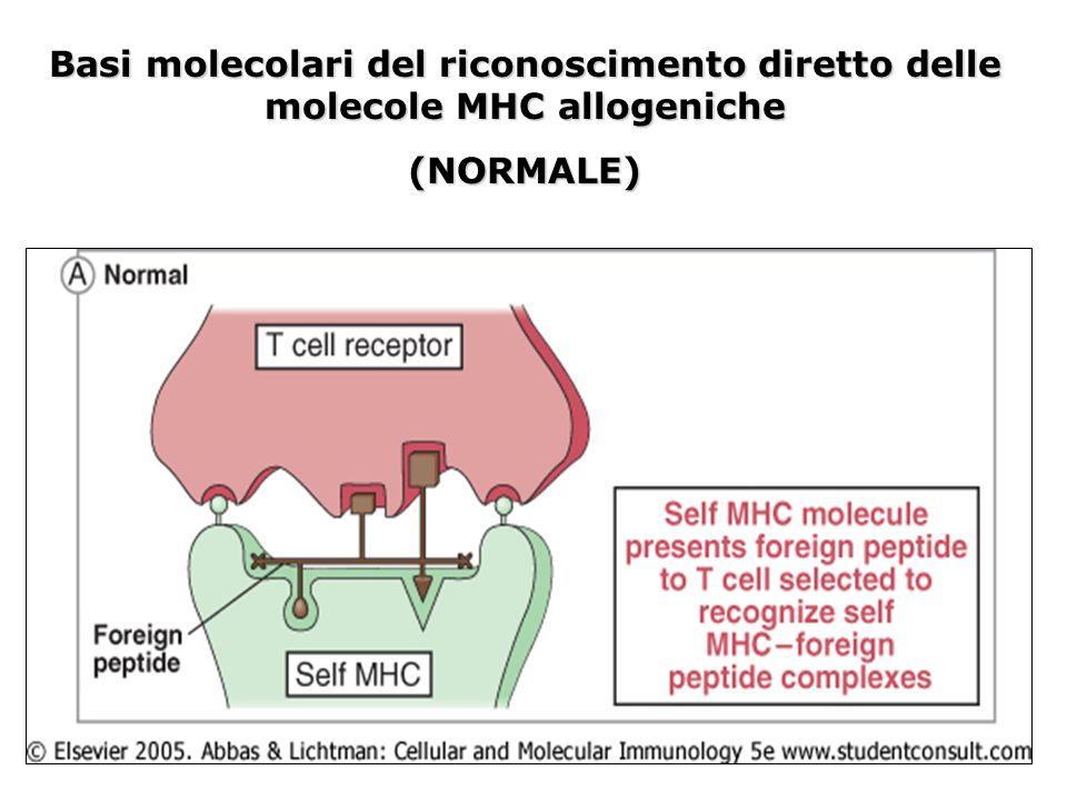 Basi molecolari del riconoscimento diretto delle molecole MHC allogeniche (NORMALE)