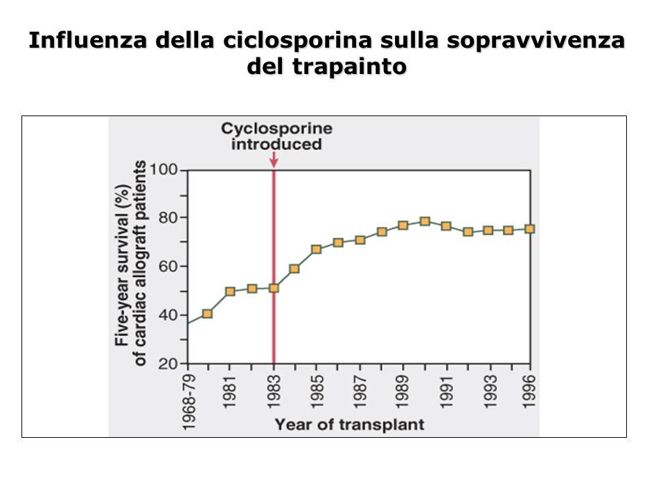 Influenza della ciclosporina sulla sopravvivenza del trapainto