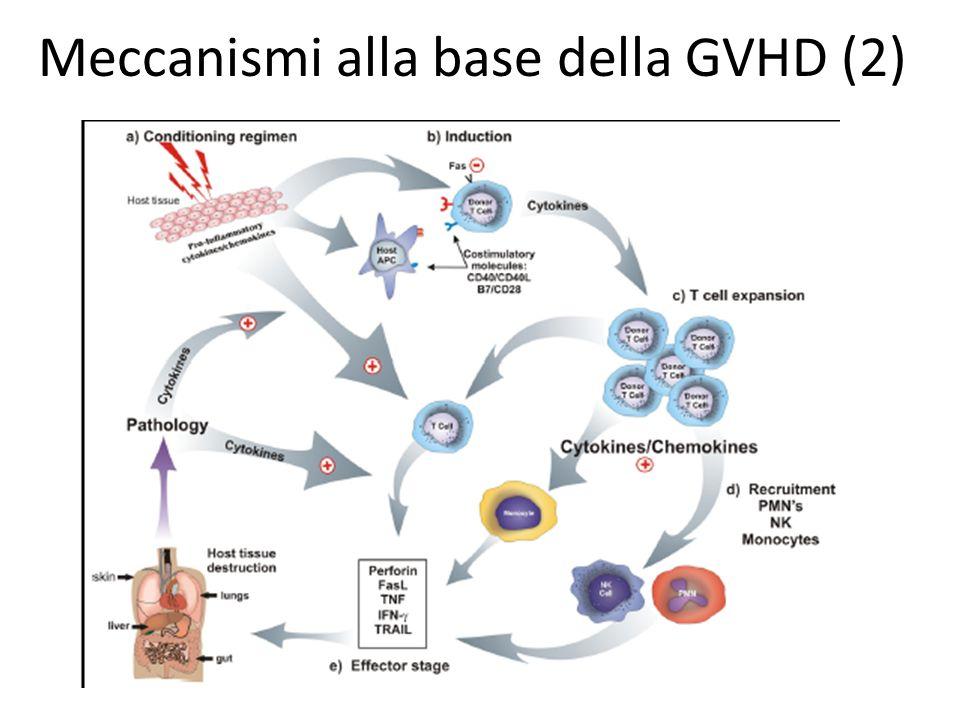Meccanismi alla base della GVHD (2)