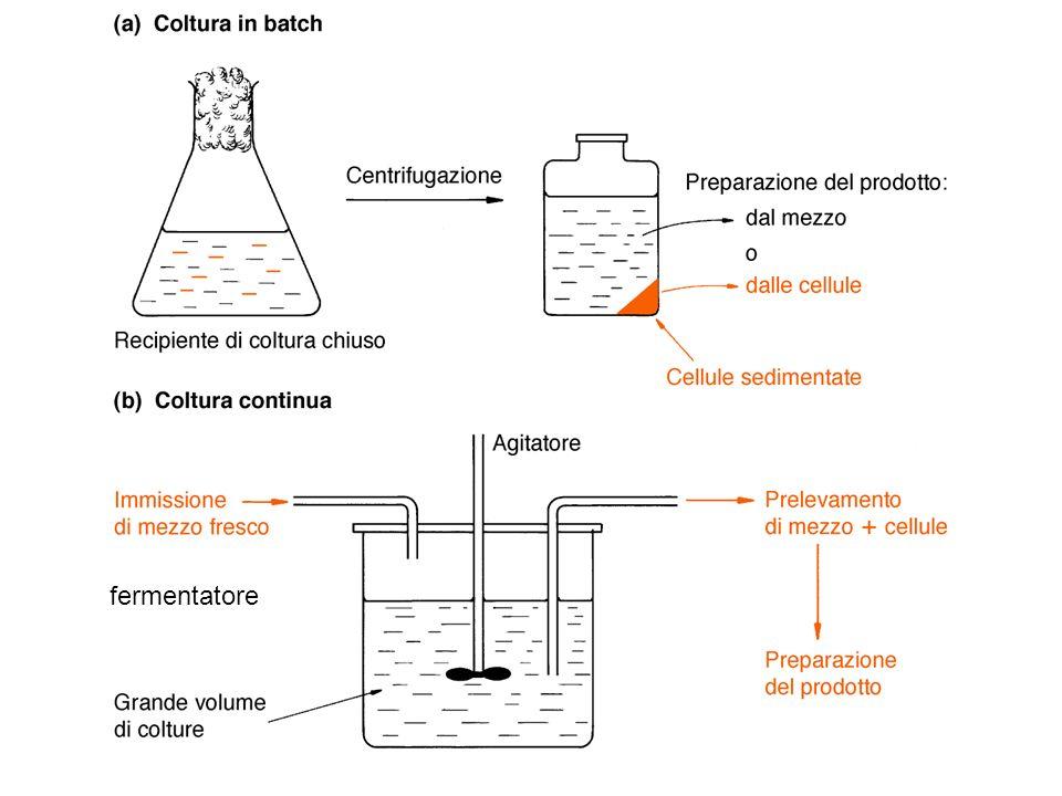 fermentatore