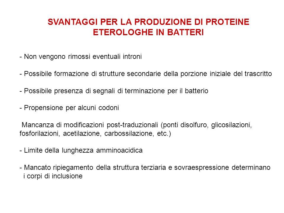 SVANTAGGI PER LA PRODUZIONE DI PROTEINE ETEROLOGHE IN BATTERI - Non vengono rimossi eventuali introni - Possibile formazione di strutture secondarie d