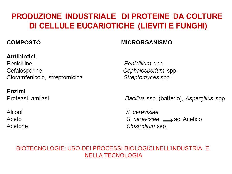 PRODUZIONE INDUSTRIALE DI PROTEINE DA COLTURE DI CELLULE EUCARIOTICHE (LIEVITI E FUNGHI) COMPOSTO MICRORGANISMO Antibiotici Penicilline Penicillium sp