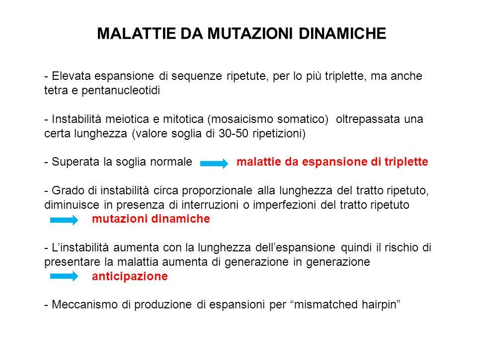 MALATTIE DA MUTAZIONI DINAMICHE - Elevata espansione di sequenze ripetute, per lo più triplette, ma anche tetra e pentanucleotidi - Instabilità meioti