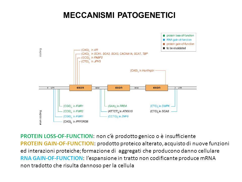 MECCANISMI PATOGENETICI PROTEIN LOSS-OF-FUNCTION: non cè prodotto genico o è insufficiente PROTEIN GAIN-OF-FUNCTION: prodotto proteico alterato, acqui