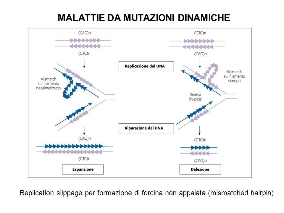 MALATTIE DA MUTAZIONI DINAMICHE Replication slippage per formazione di forcina non appaiata (mismatched hairpin)