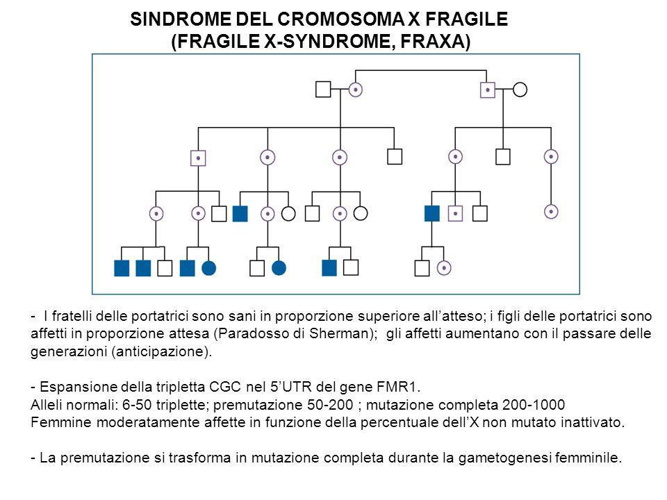 SINDROME DEL CROMOSOMA X FRAGILE (FRAGILE X-SYNDROME, FRAXA) - I fratelli delle portatrici sono sani in proporzione superiore allatteso; i figli delle