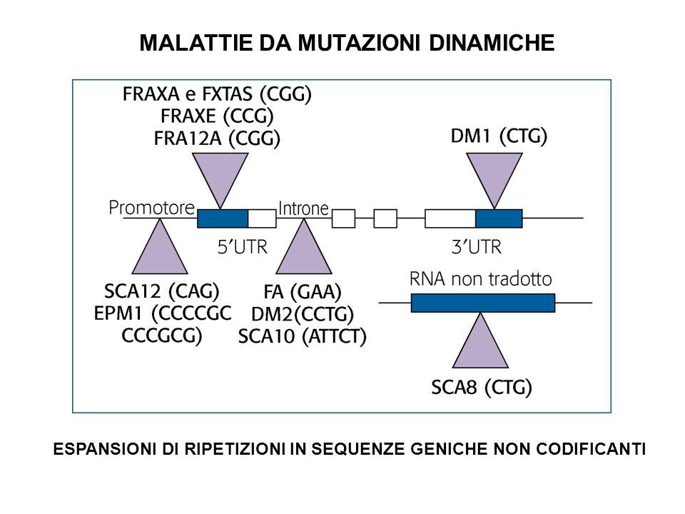 DISTROFIA MIOTONICA DI TIPO 1 (DM1) Malattia AD Espansione della tripletta CTG nel 3UTR del gene DMPK Prodotto un mRNA espanso tossico che forma struttura a forcina e sequestra RNA- binding proteins che regolano lo splicing di altri trascritti: RNA GAIN-OF-FUNCTION