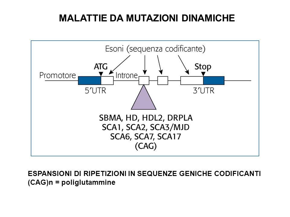 ESPANSIONI DI RIPETIZIONI IN SEQUENZE GENICHE CODIFICANTI (CAG)n = poliglutammine MALATTIE DA MUTAZIONI DINAMICHE