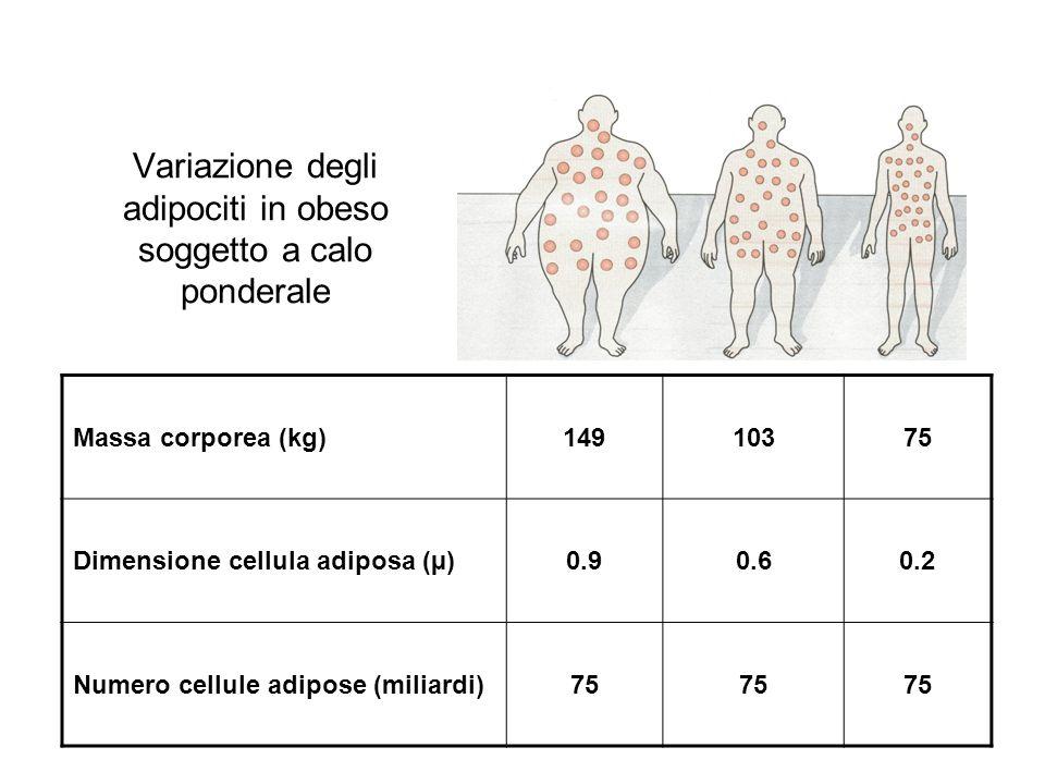 Variazione degli adipociti in obeso soggetto a calo ponderale Massa corporea (kg)14910375 Dimensione cellula adiposa (µ)0.90.60.2 Numero cellule adipose (miliardi)75