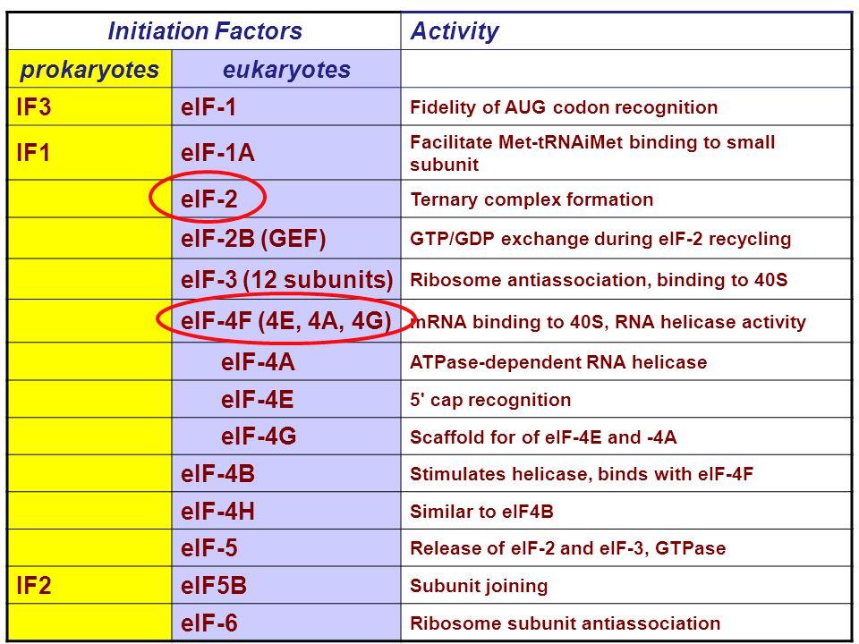 eIF2 eIF2 3 subunità: Subunità aiuta attività di GTPasi e modula il legame tRNAi-eIF2 Subunità è un regolatore della traduzione.