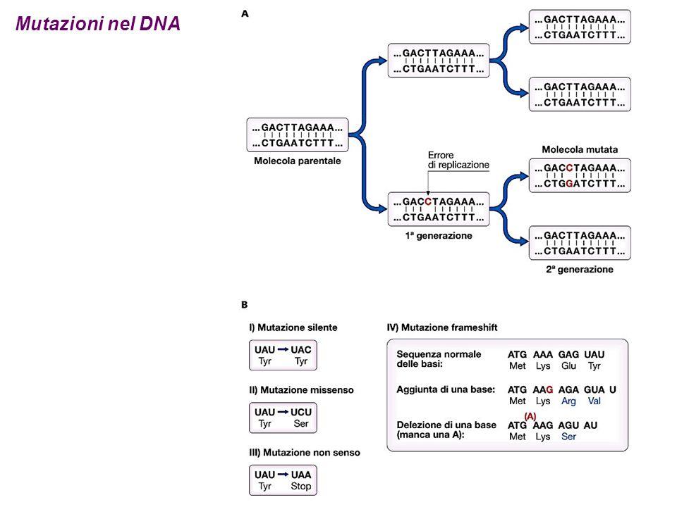 Mutazioni nel DNA