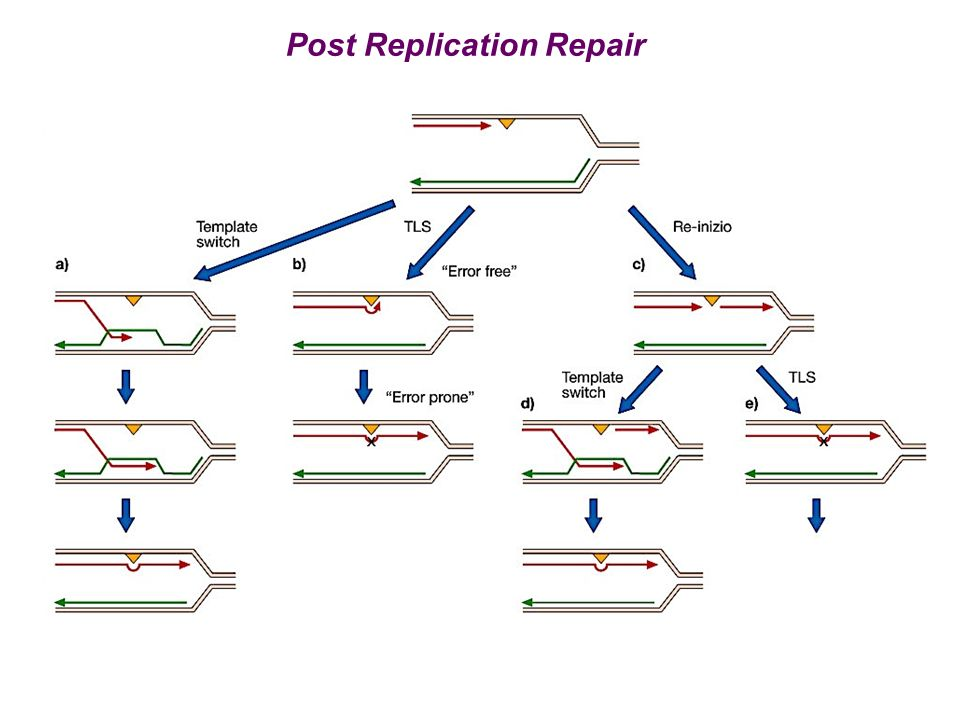 Post Replication Repair