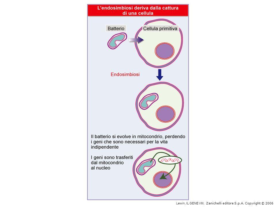 Concentrazione del DNA negli organismi Fago T4 = 500 mg/ml Batteri = 10 mg/ml Nucleo eucarioti = 100 mg/ml