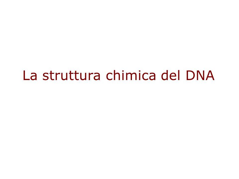 La struttura chimica del DNA