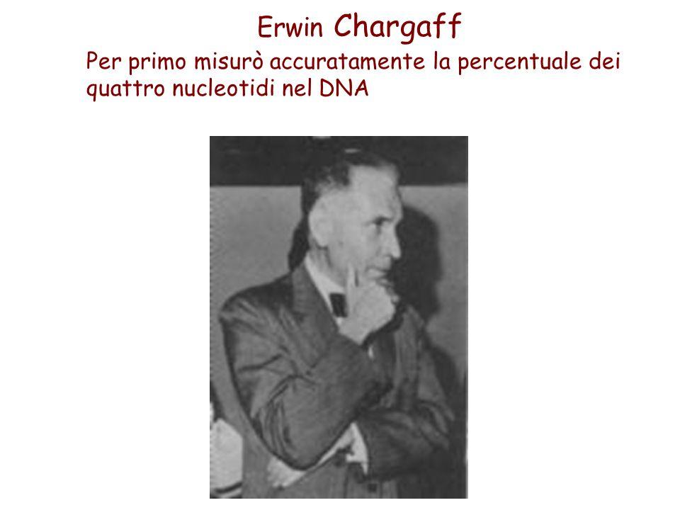 Erwin Chargaff Per primo misurò accuratamente la percentuale dei quattro nucleotidi nel DNA