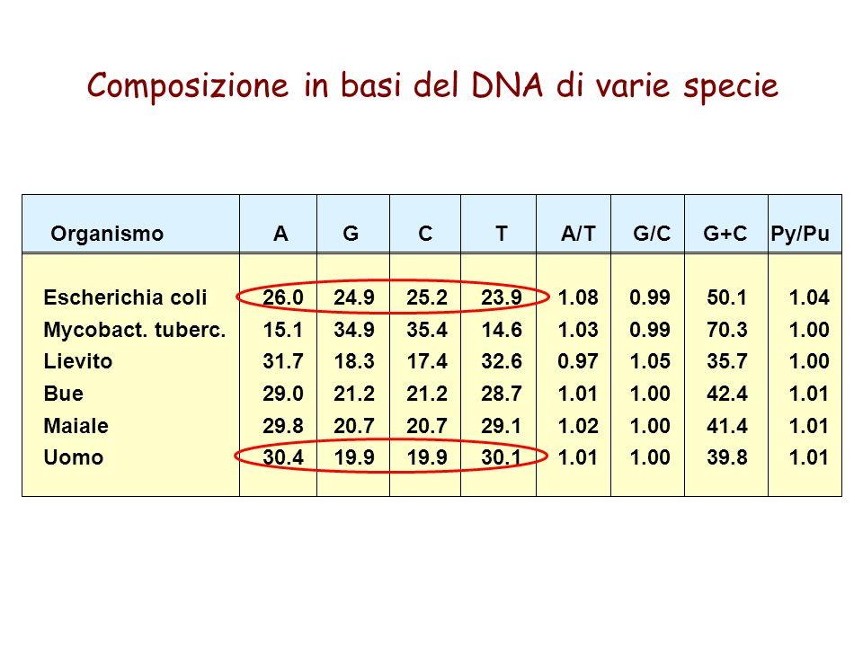 Organismo Escherichia coli Mycobact. tuberc. Lievito Bue Maiale Uomo A 26.0 15.1 31.7 29.0 29.8 30.4 G 24.9 34.9 18.3 21.2 20.7 19.9 C 25.2 35.4 17.4