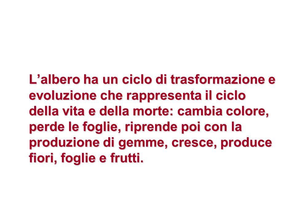 Lalbero ha un ciclo di trasformazione e evoluzione che rappresenta il ciclo della vita e della morte: cambia colore, perde le foglie, riprende poi con la produzione di gemme, cresce, produce fiori, foglie e frutti.