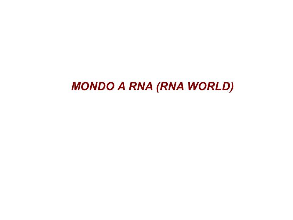 MONDO A RNA (RNA WORLD)