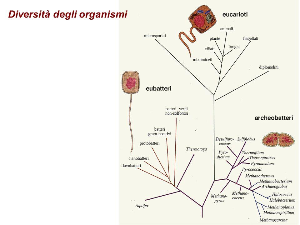 Diversità degli organismi