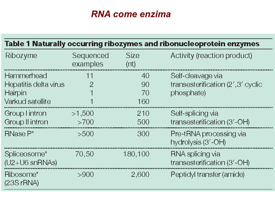 RNA come enzima
