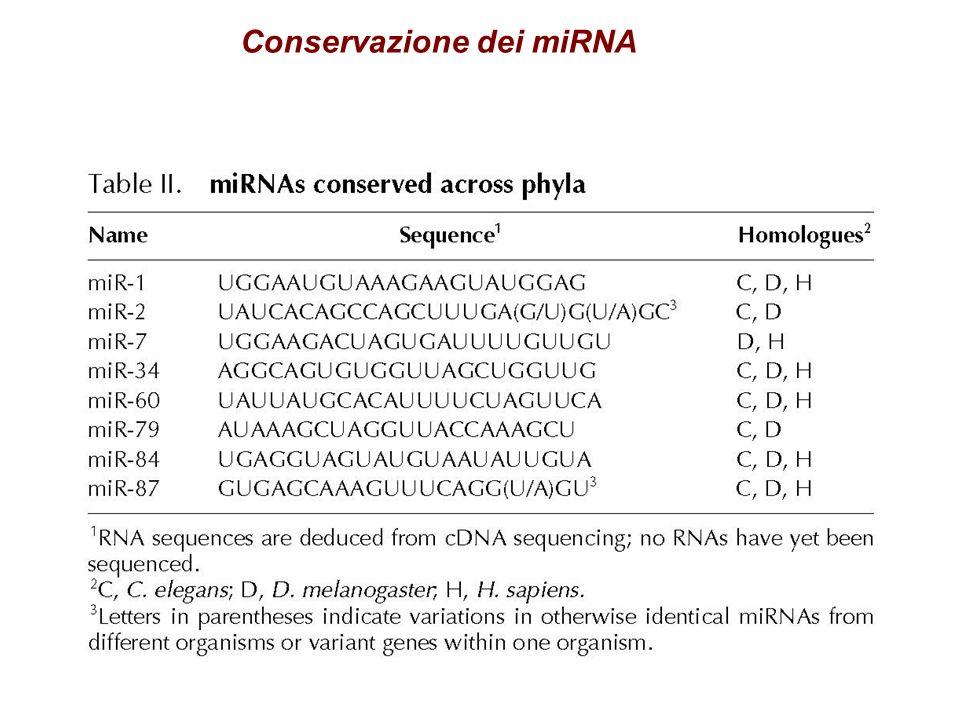 Conservazione dei miRNA