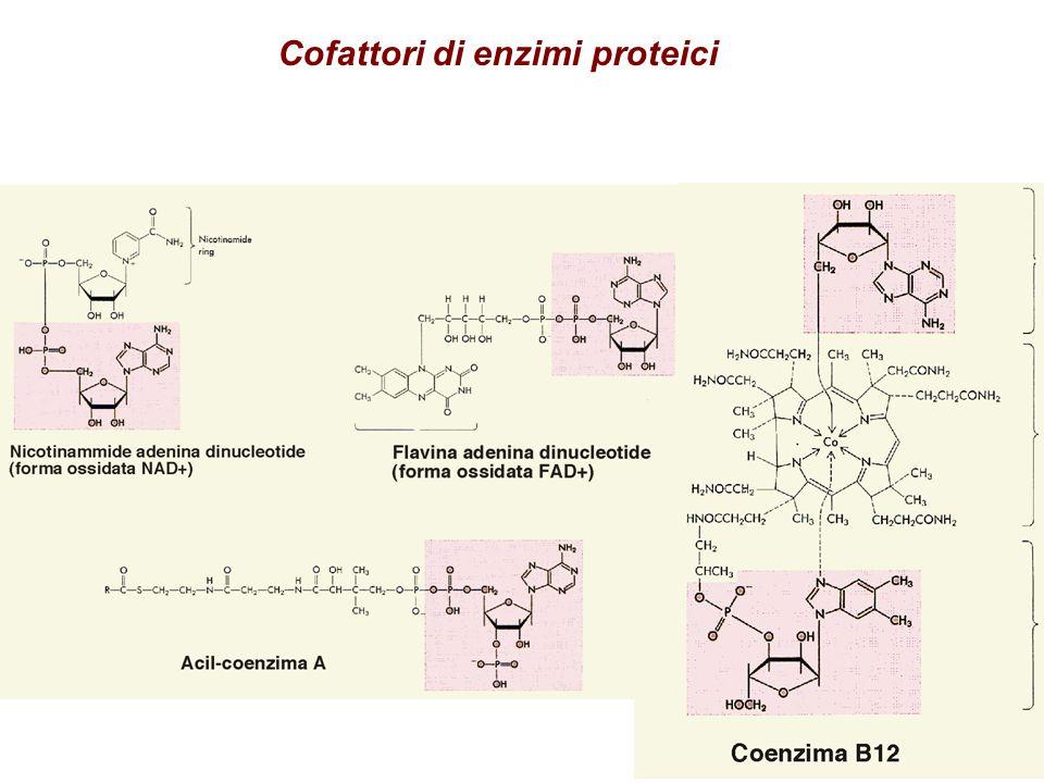 Cofattori di enzimi proteici