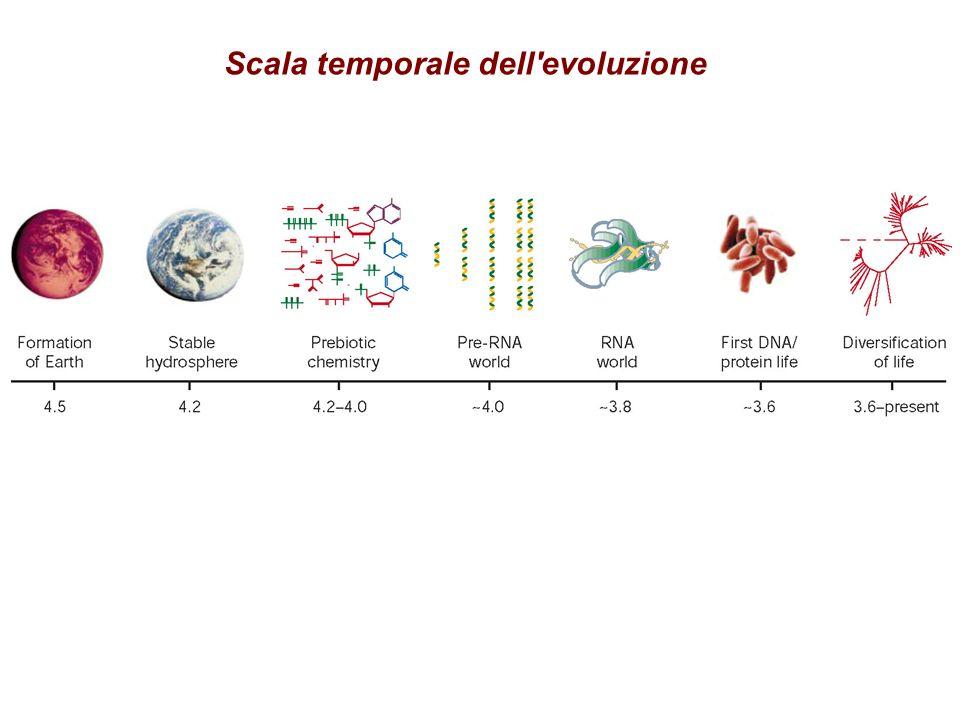 Scala temporale dell'evoluzione