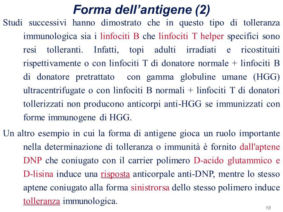 18 Forma dellantigene (2) Studi successivi hanno dimostrato che in questo tipo di tolleranza immunologica sia i linfociti B che linfociti T helper spe