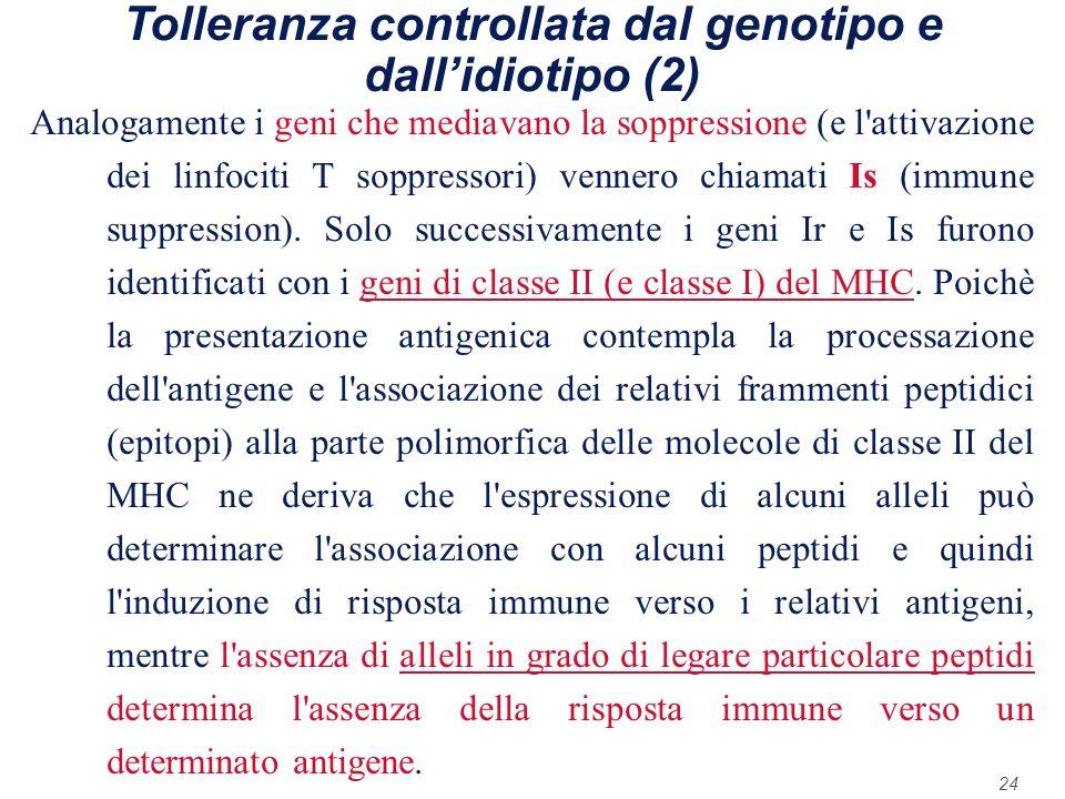 24 Tolleranza controllata dal genotipo e dallidiotipo (2) Analogamente i geni che mediavano la soppressione (e l'attivazione dei linfociti T soppresso