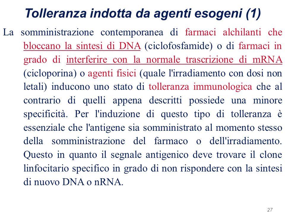 27 Tolleranza indotta da agenti esogeni (1) La somministrazione contemporanea di farmaci alchilanti che bloccano la sintesi di DNA (ciclofosfamide) o