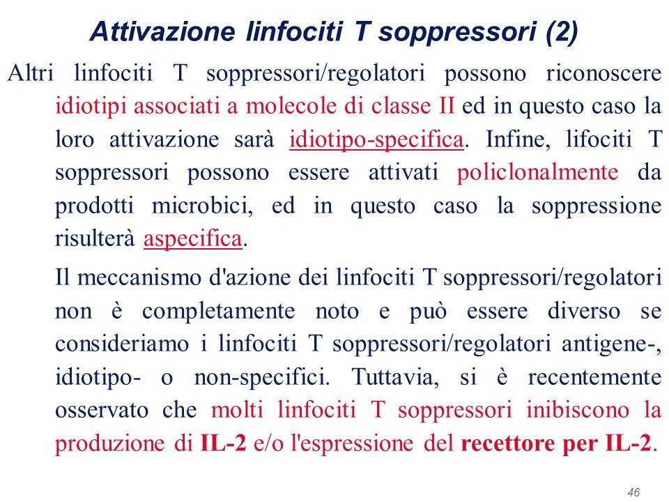46 Attivazione linfociti T soppressori (2) Altri linfociti T soppressori/regolatori possono riconoscere idiotipi associati a molecole di classe II ed