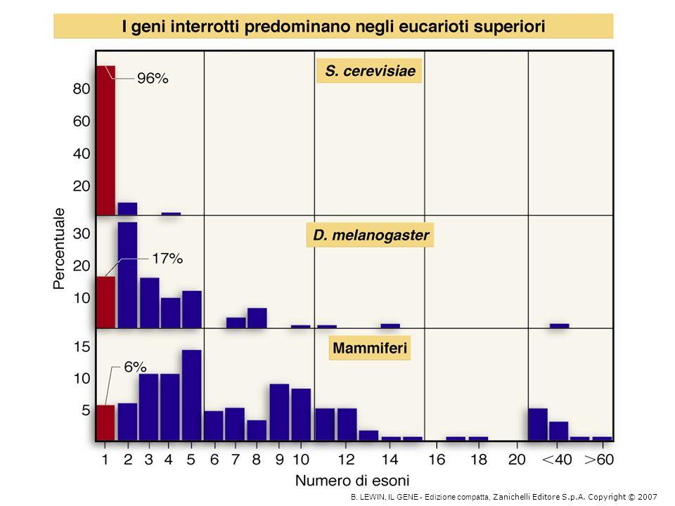 Il gene per la -tropomiosina