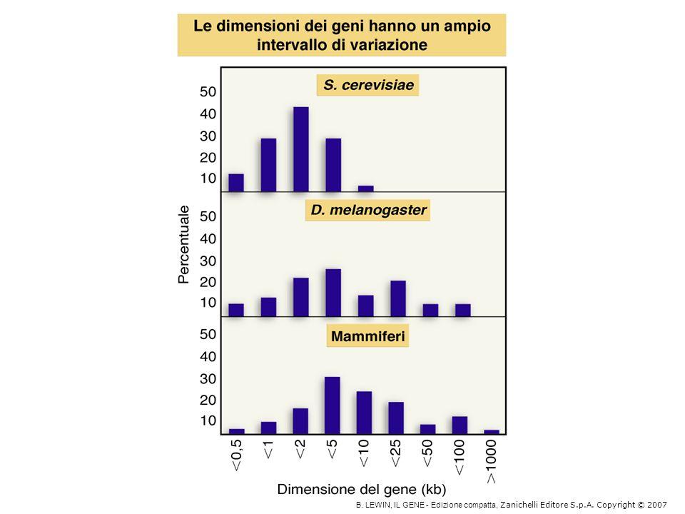 Le diverse isoforme di mRNA possono variare: nella parte codificante nella parte non tradotta