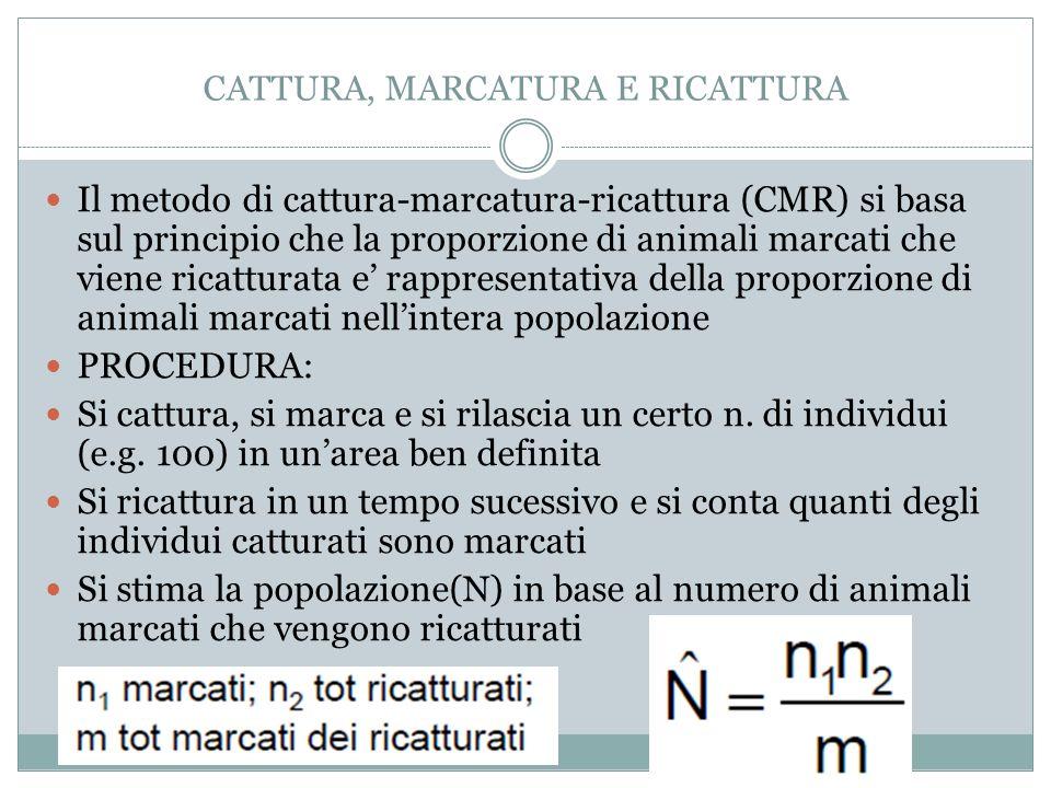CATTURA, MARCATURA E RICATTURA Il metodo di cattura-marcatura-ricattura (CMR) si basa sul principio che la proporzione di animali marcati che viene ri