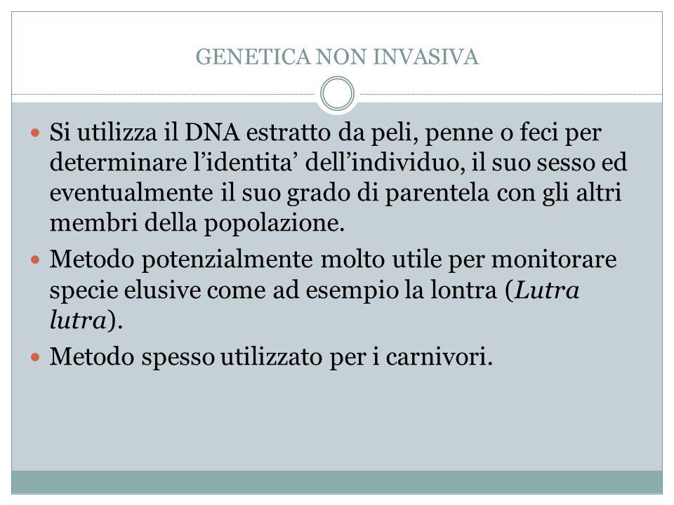 GENETICA NON INVASIVA Si utilizza il DNA estratto da peli, penne o feci per determinare lidentita dellindividuo, il suo sesso ed eventualmente il suo