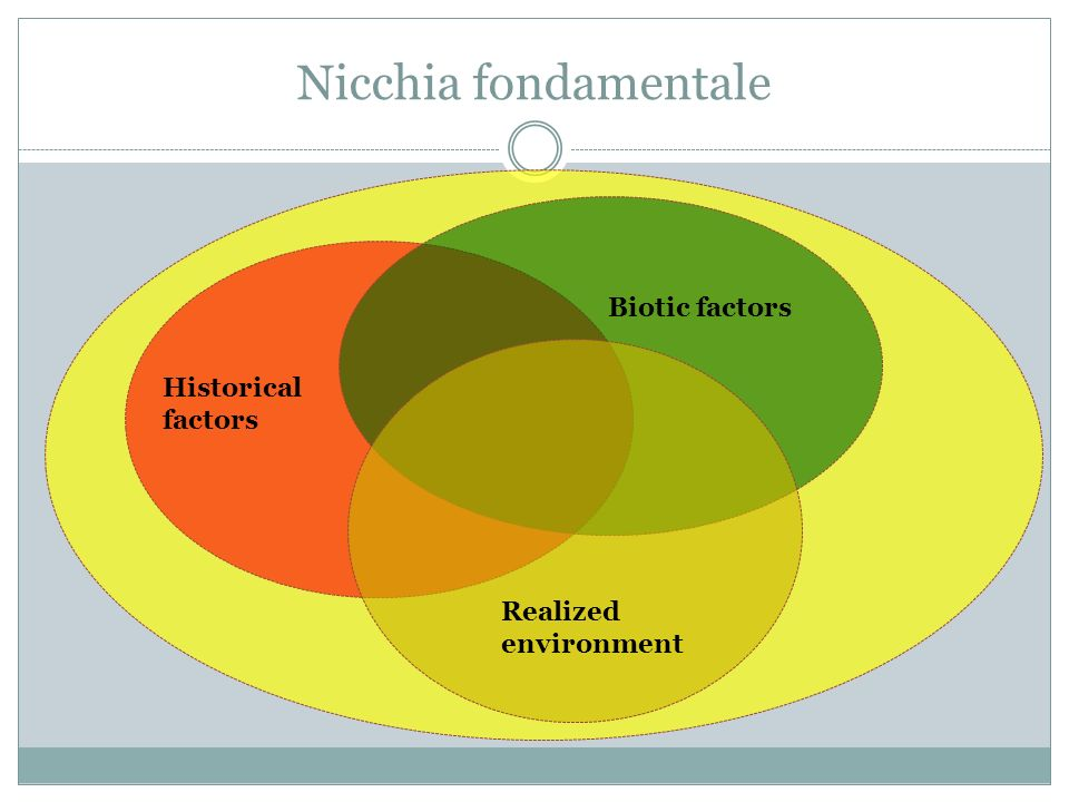 Nicchia fondamentale Historical factors Biotic factors Realized environment