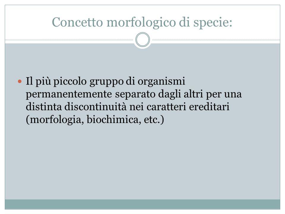 Concetto morfologico di specie: Il più piccolo gruppo di organismi permanentemente separato dagli altri per una distinta discontinuità nei caratteri e