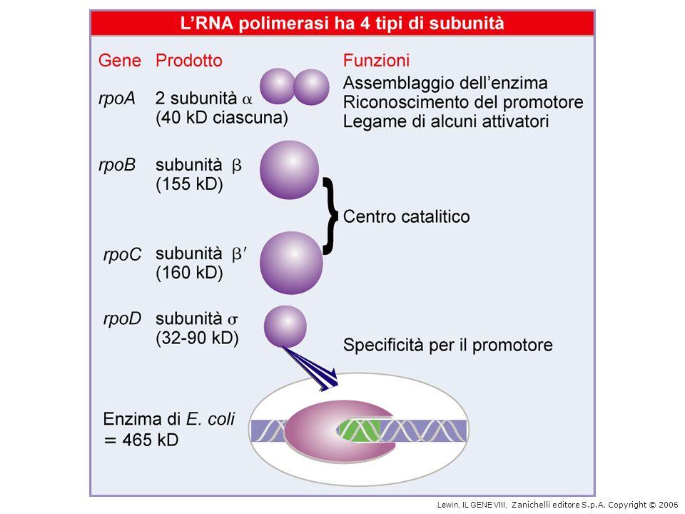 I promotori procariotici