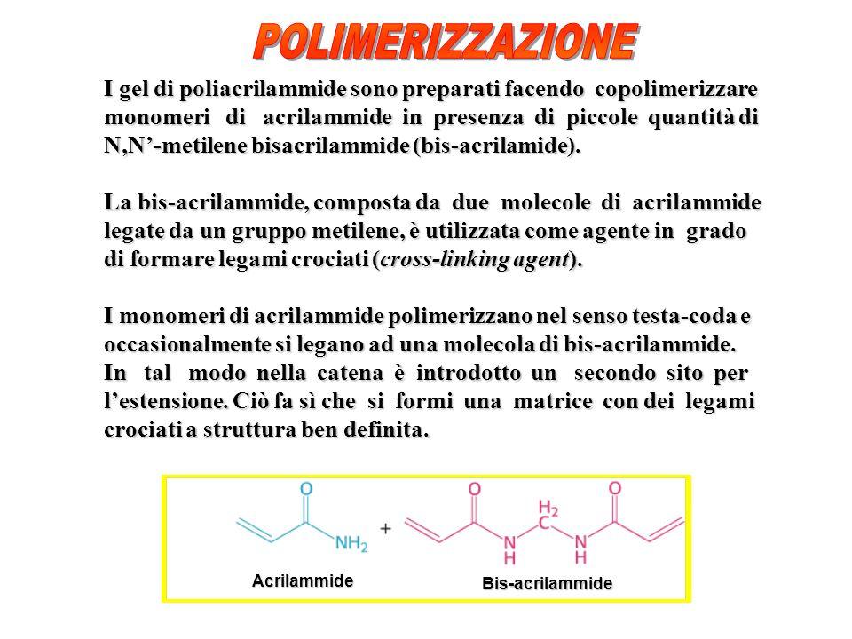 I gel di poliacrilammide sono preparati facendo copolimerizzare monomeri di acrilammide in presenza di piccole quantità di N,N-metilene bisacrilammide (bis-acrilamide).